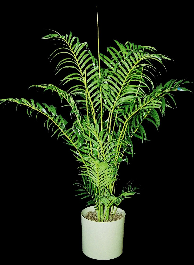 Artificial Plants | Plant Care Inc.