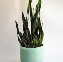 Indoor Plants 6