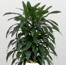 Indoor Plants 10