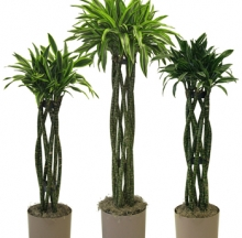 Indoor Plants 9