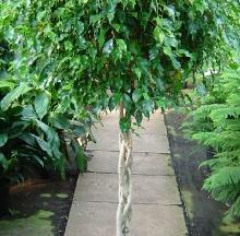 Indoor Plants 8