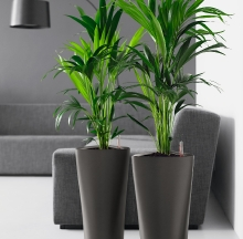 Plant Containers 21