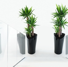 Plant Containers 27