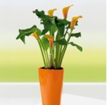 Plant Containers 10