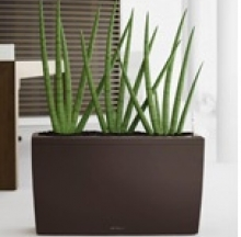 Plant Containers 12