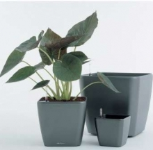 Plant Containers 1