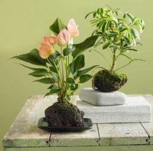 Plant Care Inc. 9