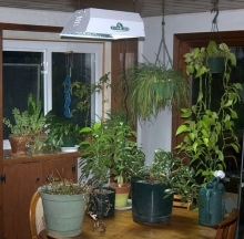 Plant Care Inc. 4